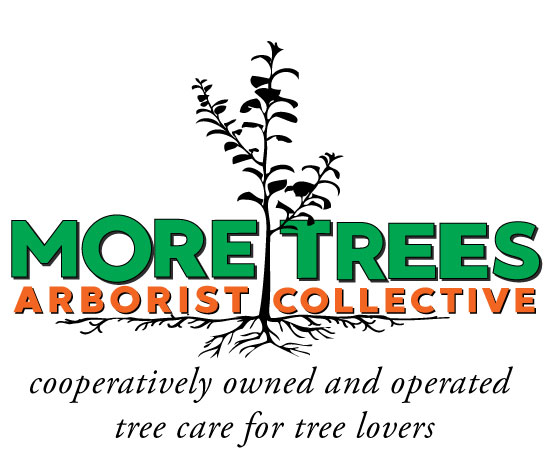 More Trees Arborist Collective